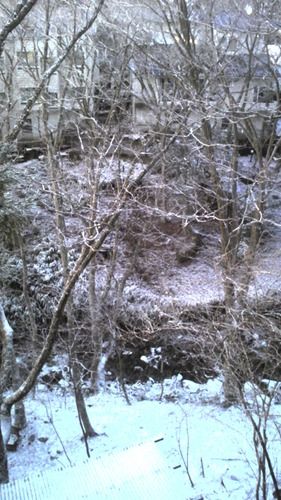 うっすら 雪化粧 2