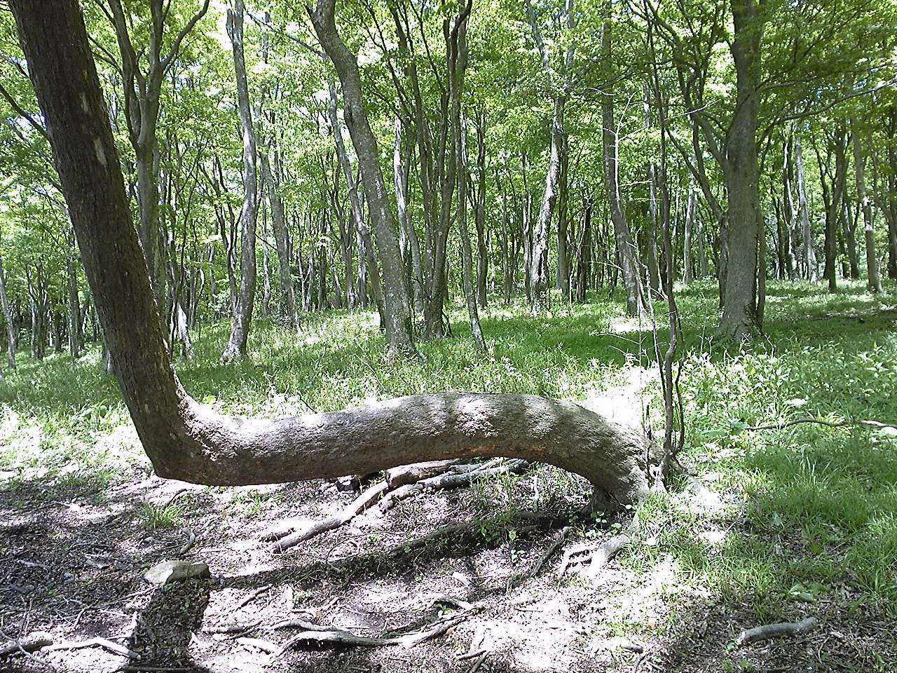 森のやさしさ?